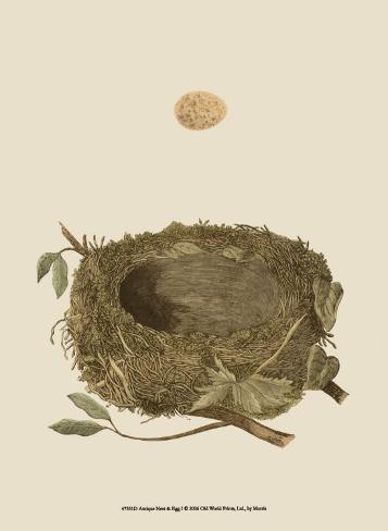 Antique Nest and Egg I Lámina