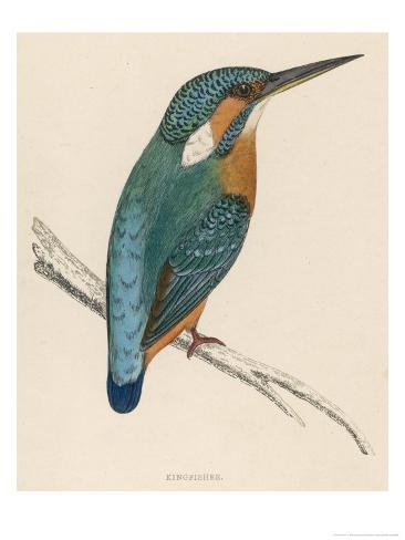 Kingfisher Sitting on a Thin Branch Giclee Print