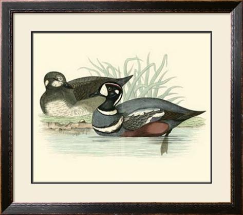 Morris Ducks IV Framed Art Print