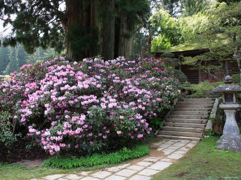 Rhododendron and Temple Photographic Print