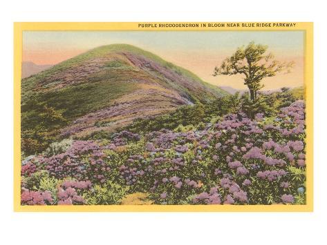 Rhododendrons, Blue Ridge Parkway, North Carolina Art Print