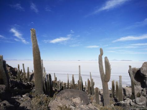 Cacti on Inkawasi Island, Salar De Uyuni, Uyuni Salt Flats, Bolivia, South America Photographic Print