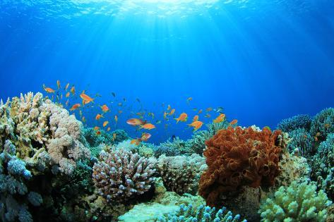 Coral Reef and Tropical Fish in Sunlight Photographic Print