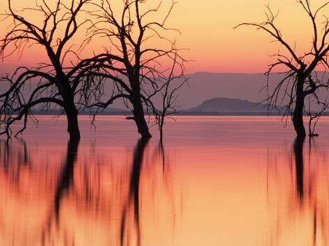 Silhouetted Trees in Salton Sea Photographic Print