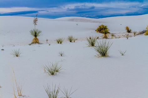 Beautiful and Surreal White Sands of New Mexico Desert Valokuvavedos