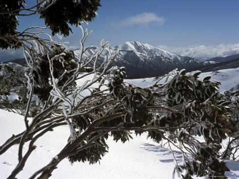 Winter Landscape of Mountains Seen Through Snow-Covered Tree Branches, High Country, Australia Valokuvavedos
