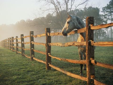 A Horse Watches the Mist Roll in over the Fields Photographic Print