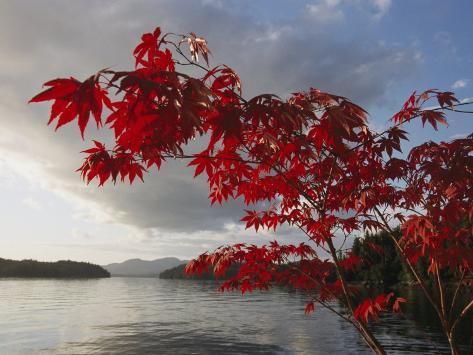 Un árbol de arce con los colores del otoño enmarca una vista del ...