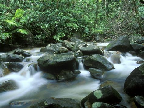 Rainforest, Daintree National Park, Queensland, Australia Photographic Print