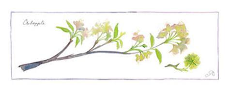 Crabapple Branch Art Print