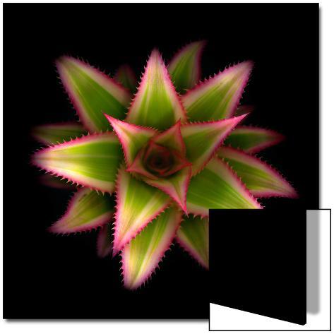 Cactus Star Art on Acrylic