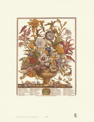 Twelve Months of Flowers, 1730, September Art Print