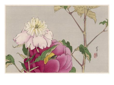 Japanese Print - Moth Giclee Print