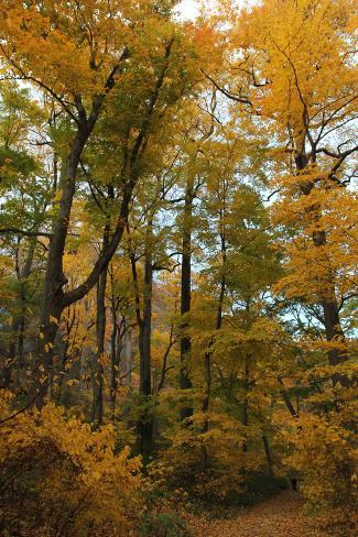 Inwood Park Fall Vertical Stampa fotografica
