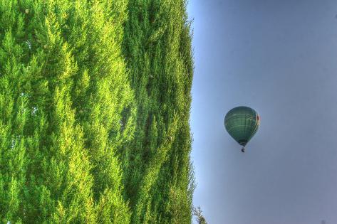 Tuscan Cedar and Balloon Stampa fotografica