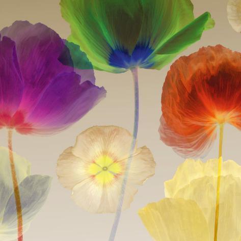 Poppy Panorama I Art Print