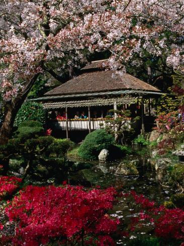Japanese Tea Garden San Francisco California Usa Photographic Print By Roberto Gerometta