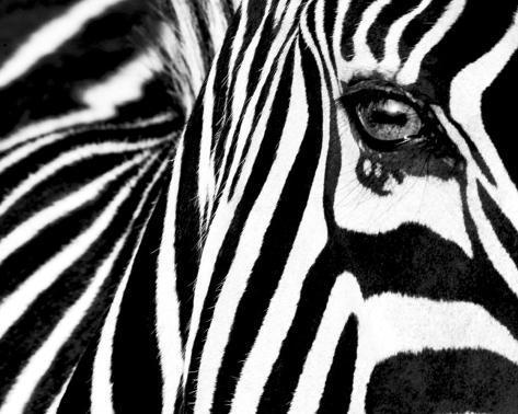 Black white ii zebra print
