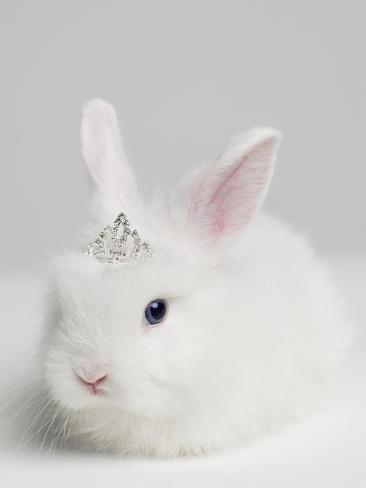 オールポスターズの roger wright white bunny rabbit wearing tiara