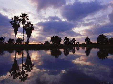 Palm Trees Silhouetted by Water at Sunset, Texas, USA Photographic Print