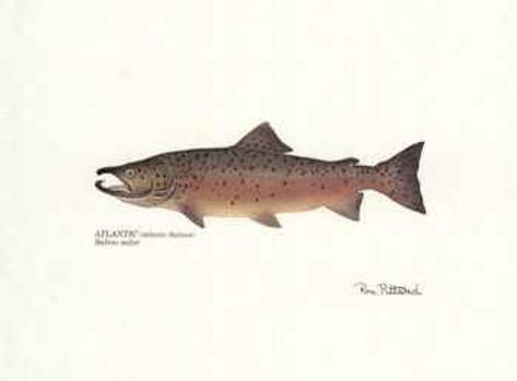 Atlantic fish posters by ron pittard at for Atlantic fish menu
