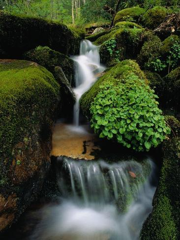 Cascading Stream in Great Smoky Mountains Photographic Print