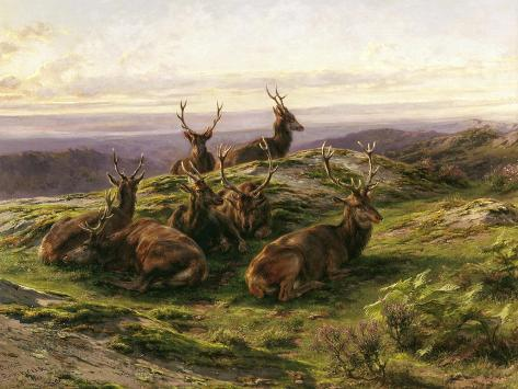 Stags at Rest Giclee Print