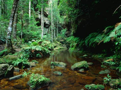 Temperate Rainforest at Greaves Creek, Feature of Grand Canyon Walk Blue Mountains NP, Australia Photographic Print