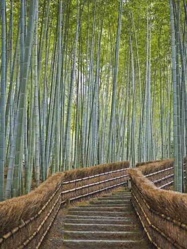 Bamboo Lined Path at Adashino Nembutsu-ji Temple Photographic Print