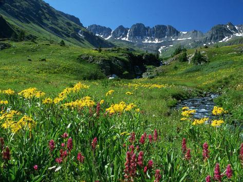Wildflowers, American Basin Photographic Print