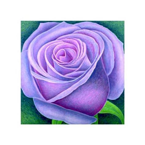 Big Rose, c.2004 Art Print