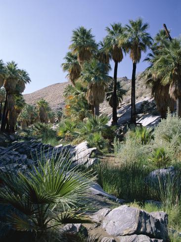 Palm Canyon, Palm Springs, California, USA Photographic Print