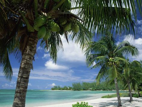 Palms on Shore, Cayman Kai Near Rum Point, Grand Cayman, Cayman Islands, West Indies Photographic Print
