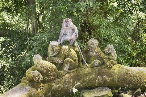 Resultado de imagen para ubud monkey forest