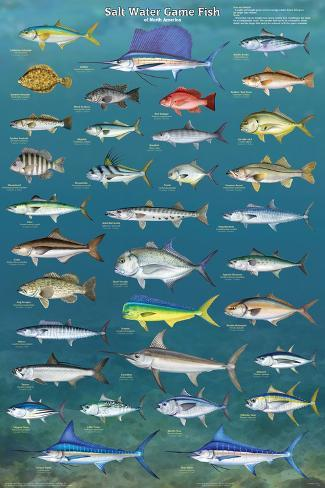 Salt water game fish prints for All fishing games