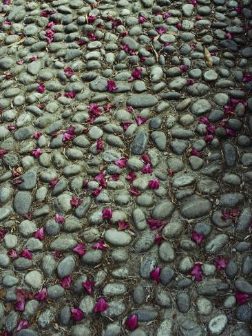 Flower-Strewn Cobblestones Photographic Print