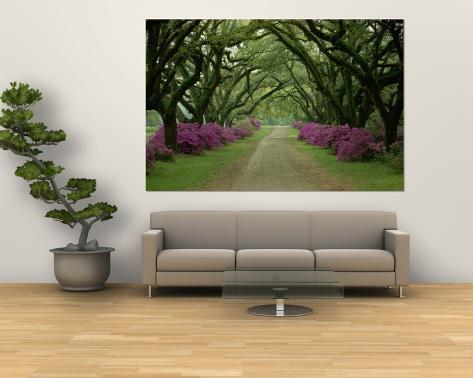 786c2ada0 Linda trilha com árvores e azaleias roxas Pôsters por Sam Abell na  AllPosters.com.br