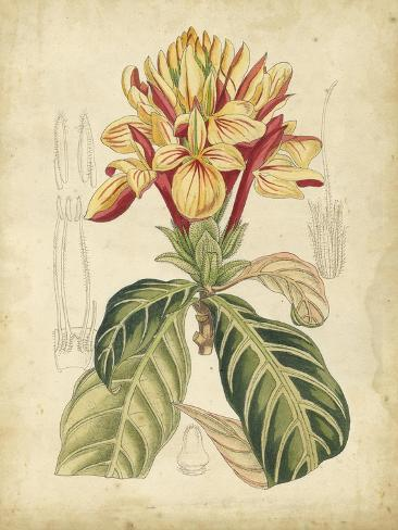 Curtis Tropical Blooms IV Art Print