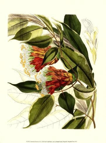 Fantastical Botanical II Art Print