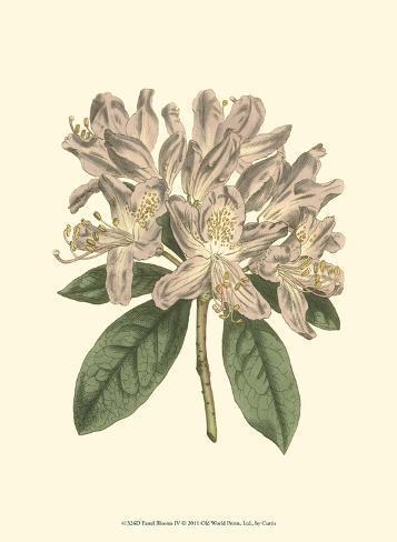 Pastel Blooms IV Art Print