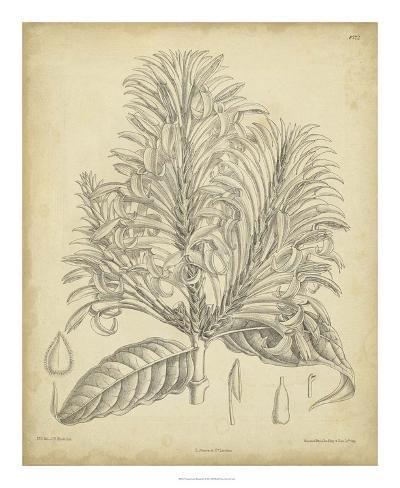 Vintage Curtis Botanical V Giclee Print