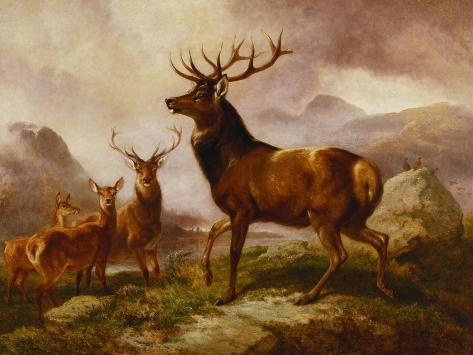 A Proud Stag Giclee Print