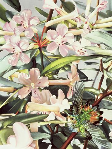 Humming Bird, 1989 Giclee Print