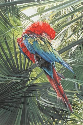 Scarlet Macaw, 1989 Giclee Print