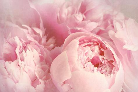 closeup of peony flowers photographic print by sandralise at
