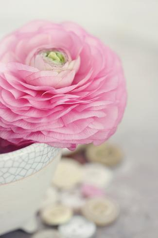 Softy Elegant II Stampa fotografica