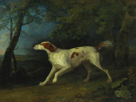 A Brown and White Setter in a Wooded Landscape, 1773 Lámina giclée