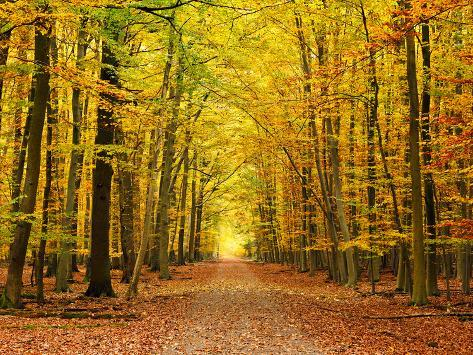 Autumn Pathway Photographic Print