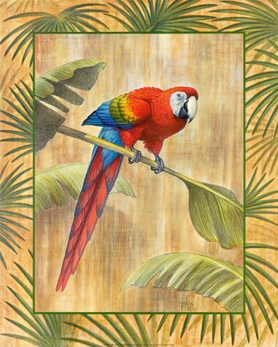 Scarlet Macaw Konstprint
