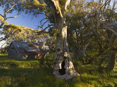 Wallace's Hut, Bogong High Plains, Apline National Park, Victoria, Australia, Pacific Photographic Print